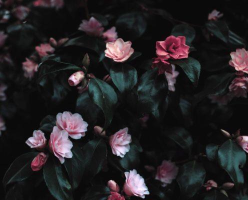 Frei sein mit Dir – Captive Romance